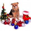 Christmas puppy with colorful decorations - Stock Photo