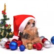 Santa dog with Christmas decorations — Stock Photo