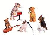 Psí orchestr nebo skupina provádí nové složení — Stock fotografie