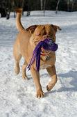Pes hrát venku — Stock fotografie