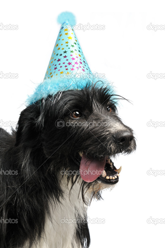 Dog wearing party cone, isolated — Stock Photo #9837235