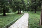 Pedestrian path in the forest park — Stock Photo