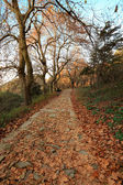 Autumn mountain path — Stock Photo