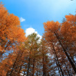 Autumn woods under the sky — Stock Photo