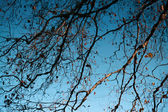 Branches in the lake reflected — Stock Photo