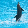 Dancing dolphin — Stock Photo