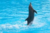 Dancing dolphin — Stock Photo