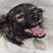 Dog portrait — Stock Photo