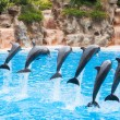 Dolphins — Stock Photo #9816067