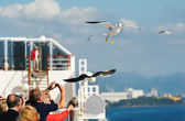 Feed seagulls — Stock Photo