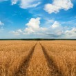 Stock Photo: Road through wheat field