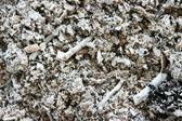 Svart grå aska — Stockfoto