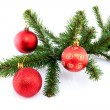 Branch of christmas tree with red balls — Stock Photo