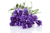Bunch of picked lavender — Stock Photo