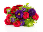 Bouquet of colorful Asters flowers — Stock Photo