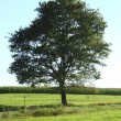 Of single tree — Stock Photo