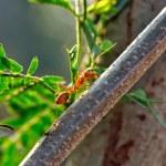 Ant - Formica rufa — Stock Photo #10318271