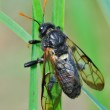 Fly in green nature — Stock Photo #10318928
