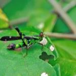 True macro of a grasshopper — Stock Photo #10319282