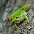 Frog is in a natural habitat - Stock Photo