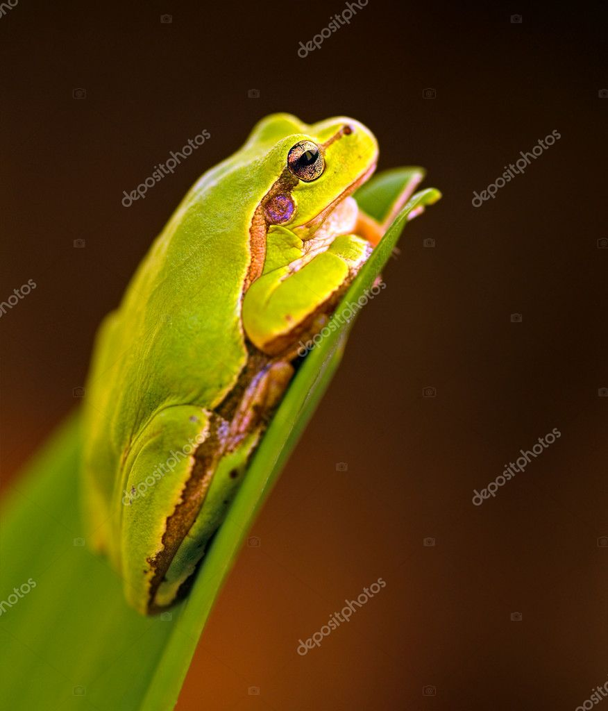 Frog is in a natural habitat — Stock Photo #10693816