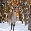Stock Photo: Deer among trees