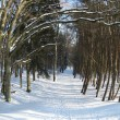 Stock Photo: Winter path