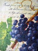 Papier z winogron — Zdjęcie stockowe