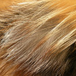 Fox fur — Stock Photo
