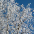 Winter trees — Stock Photo #10415791