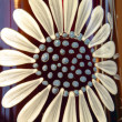 Painted marguerite — Stockfoto