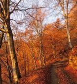 Strada sterrata attraverso una faggeta d'autunno all'alba — Foto Stock