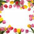 Stock Photo: Tulip Frame