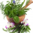 Herbal Therapy — Stockfoto