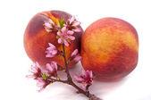 Peach Blossom and Fruit — Stock Photo
