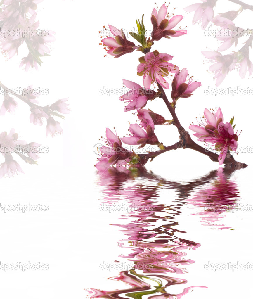 Peach blossoms and water reflection — Stock Photo #9037213