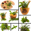 herb collage — Stock Photo