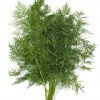 Stock Photo: Dill Herb