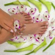 Pedicured feet, manicured hand and orchids - ストック写真