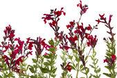 Wilde bloemen — Stockfoto