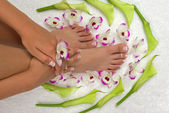 Pedicured feet, manicured hand and orchids — Stock Photo