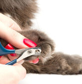 Trimming cat's nails — Stockfoto