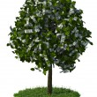 Money tree, hundred dollar bills — Stock Photo