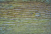 Roble abstracto — Foto de Stock