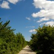 Pathway — Stock Photo #8309174
