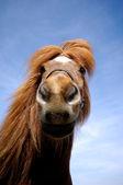 Gezicht van een nieuwsgierig paard — Stockfoto