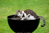 Hungry cat — Stock Photo