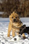 Hraje psi — Stock fotografie