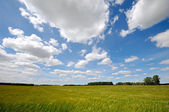 Corn and clouds — Stock Photo