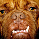 Ugly dog face — Stock Photo